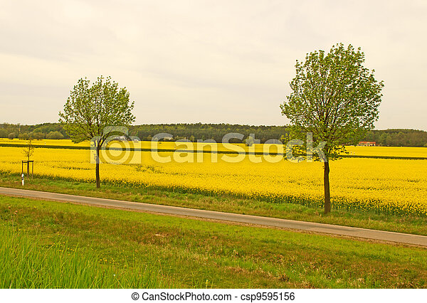 Landscape - csp9595156