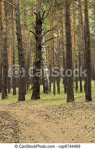Landscape - csp9744469