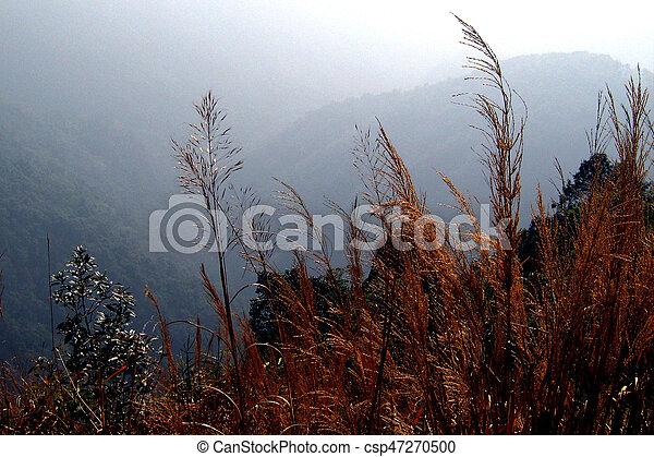 landscape - csp47270500