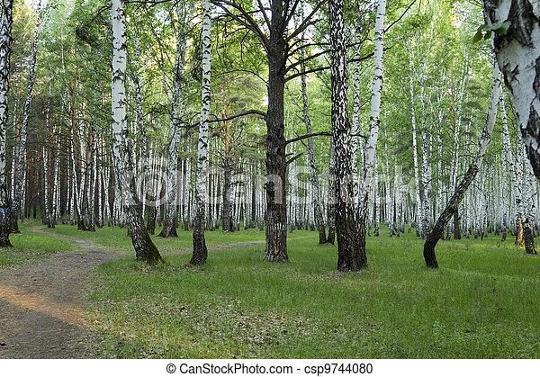 Landscape - csp9744080