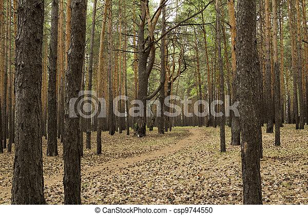 Landscape - csp9744550