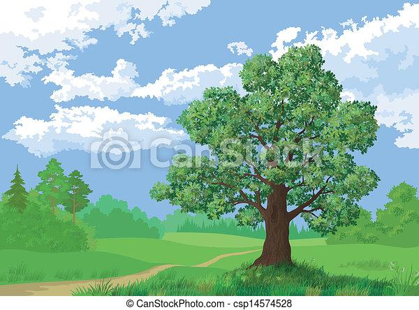 Landscape, summer forest and oak tree - csp14574528