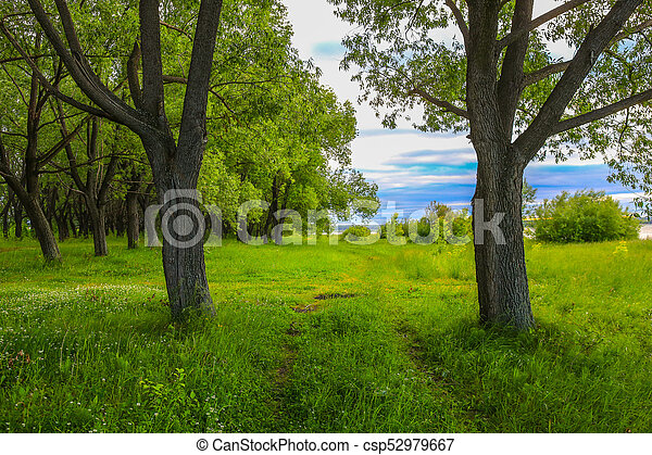 landscape with a path at the edge of the forest - csp52979667