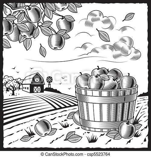 Landscape with apple harvest black  - csp5523764