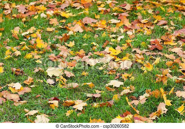 Landscape with fallen leaves - csp30260582