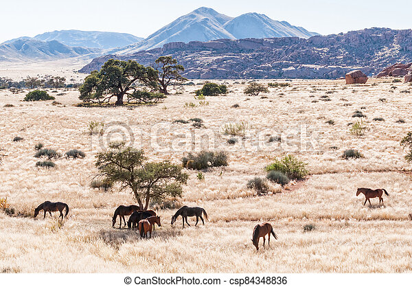 Landscape, with horses, at Koiimasis - csp84348836