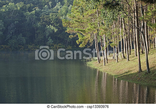 Landscape with pine trees lake - csp13393976