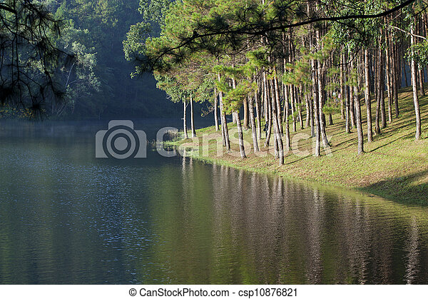 Landscape with pine trees lake - csp10876821