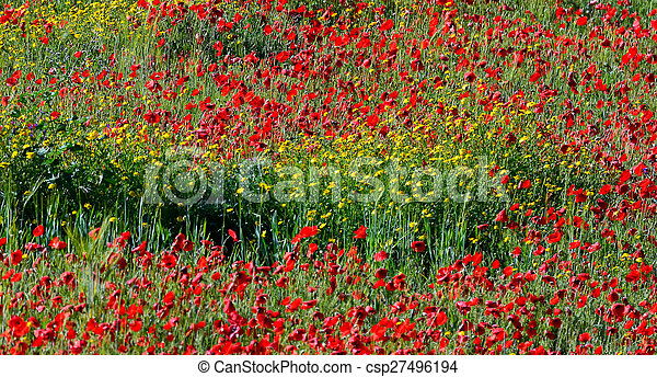 Landscape with poppies and yellow flowers in southern spain landscape with poppies and yellow flowers csp27496194 mightylinksfo