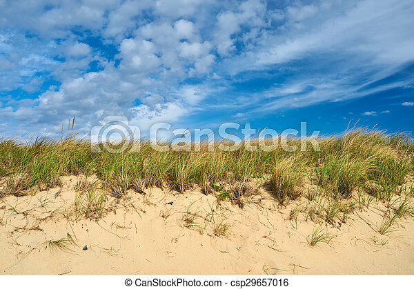 Landscape with sand dunes at Cape Cod - csp29657016