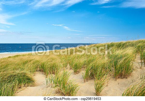 Landscape with sand dunes at Cape Cod - csp29819453