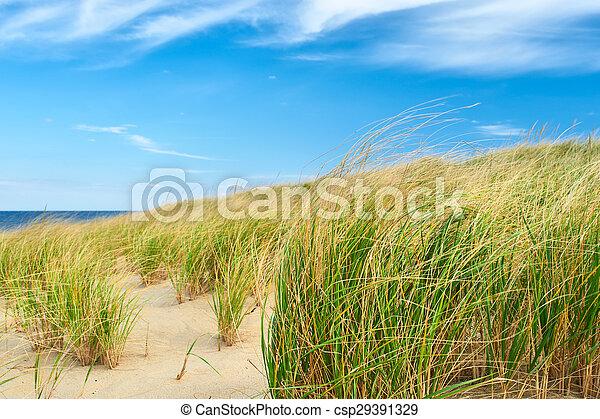Landscape with sand dunes at Cape Cod - csp29391329