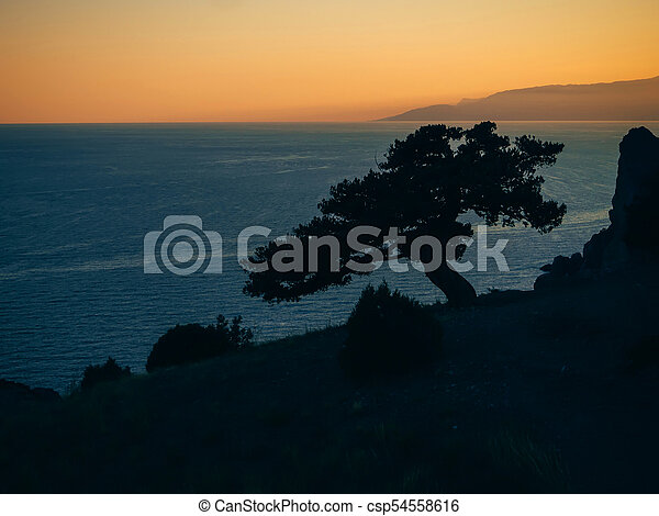 landscape with silhouette of pine trees on edge of a mountain overlooking the sea - csp54558616