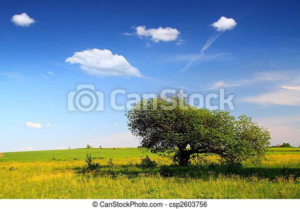 landscape with strange tree - csp2603756