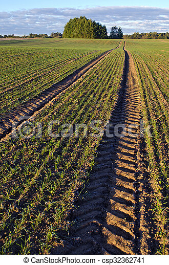 Landscape with tractor tracks through wheat field in  autumn - csp32362741