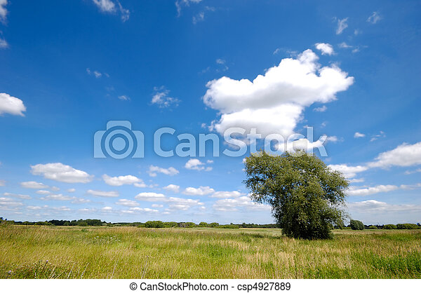 Landscape with tree - csp4927889