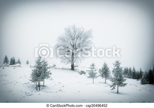 Landscape with trees in hoarfrost - csp30496452