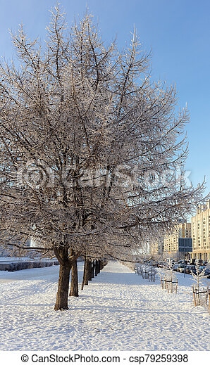 landscape with trees in hoarfrost - csp79259398