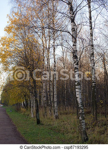 landscape with trees in the park - csp87193295