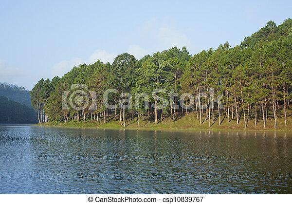 landschaftsbild, kiefer bäume, see - csp10839767