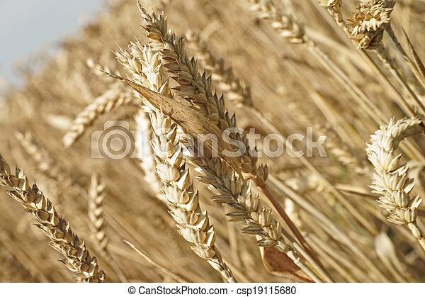 landwirtschaft - csp19115680