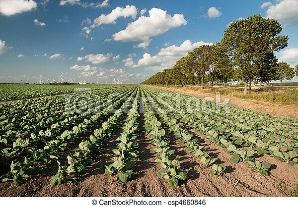 landwirtschaft, landschaftsbild - csp4660846