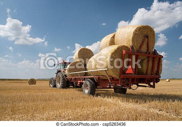landwirtschaft, -, traktor - csp5263436