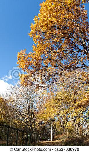 lane in autumn park - csp37038978
