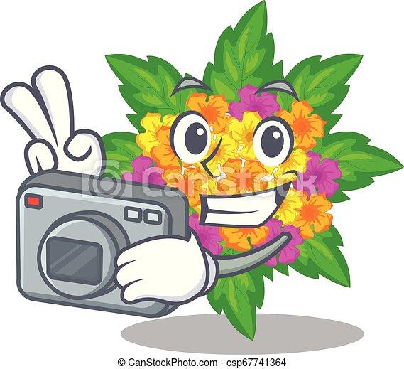 lantana , φωτογράφος , σχήμα , λουλούδια , γελοιογραφία  - csp67741364