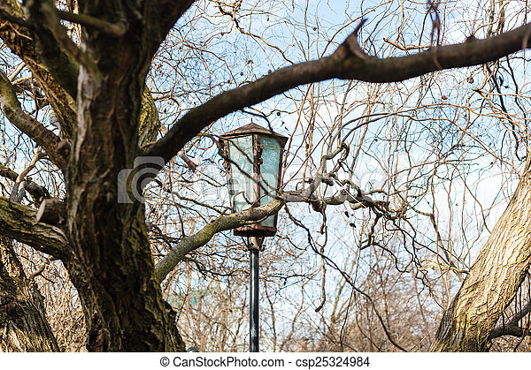 lantern between branches in sunny spring day - csp25324984