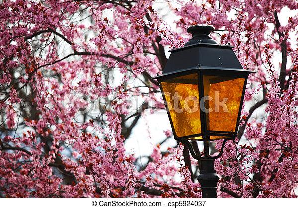 lantern in lilac - csp5924037