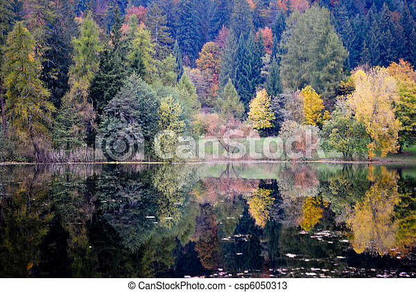 larch and pine - csp6050313