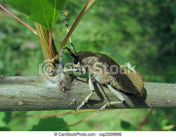 Large beetle on the branch - csp3309886