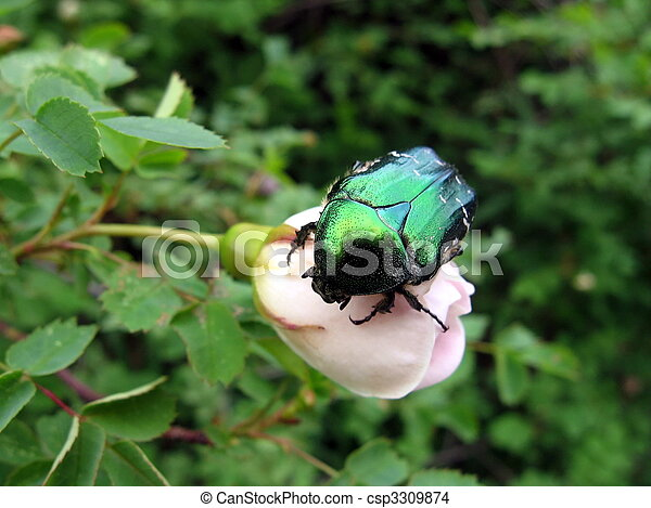Large beetle - csp3309874