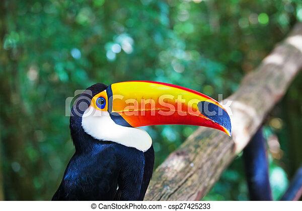 Large bird with huge yellow beak - csp27425233