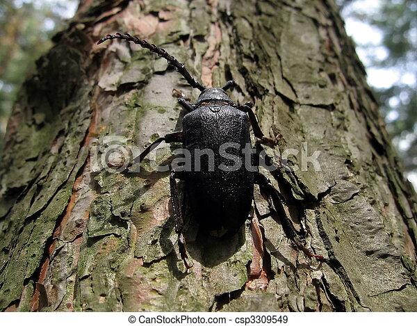 Large black beetle - csp3309549