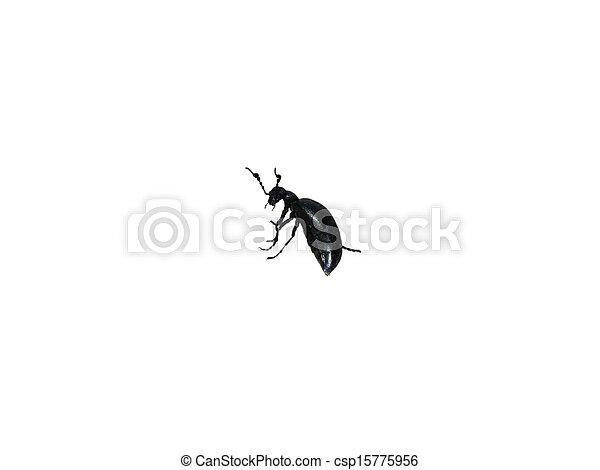 Large black beetle turned. - csp15775956