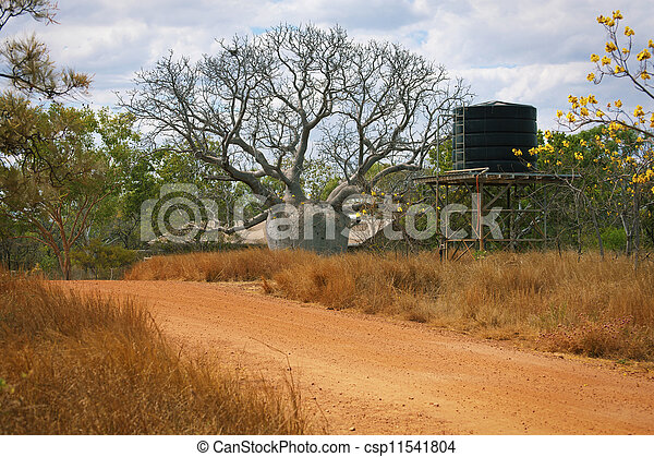 Large Boab Tree - csp11541804