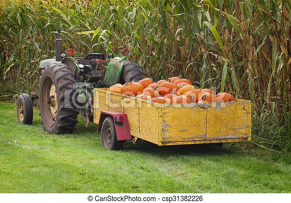 Large box of orange pumpkins. - csp31382226