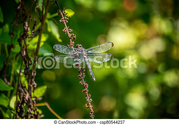 Large dragonfly perched - csp80544237