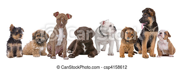 Large Group Of Puppies On A White Backgroundfrom Left To Right