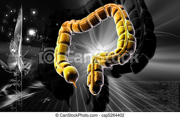 Large intestine - csp5264402