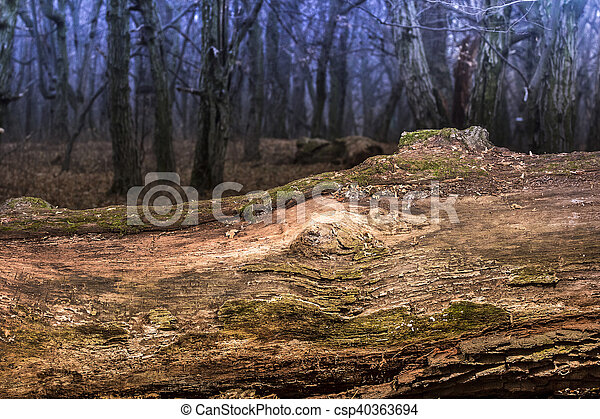 Large moss wrapped tree lying, deciduous forest - csp40363694