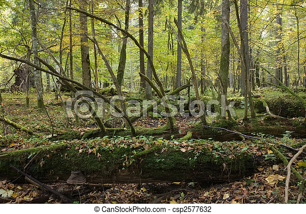 Large moss wrapped tree lying - csp2577632
