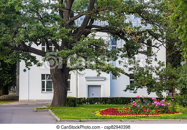 Large oak on the lawn in front of a two-story mansion - csp82940398