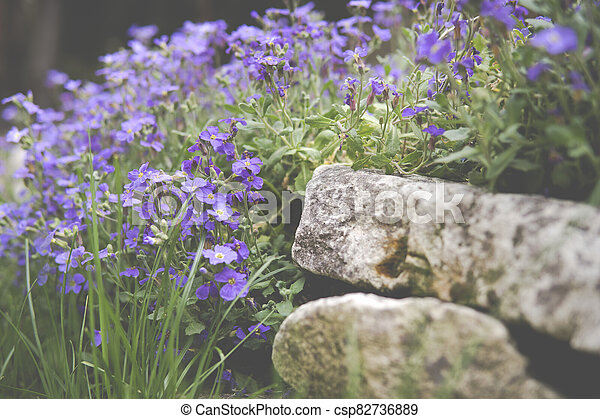 large quantity of small purple flowers - csp82736889