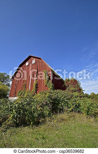 Large Red Abandoned Hip Roof Barn A Huge Red Abandoned Red Hip Roofed Barn Is Surrounded By Vines And The Autumn Colored Canstock