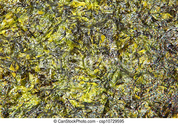 Large thin sheet of pressed seaweed pan fried in olive oil, texture background.  - csp10729595