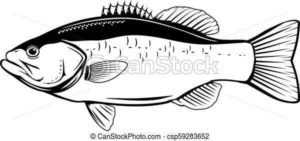 Largemouth Bass Fish Largemouth Bass Fish In Side View In Black And