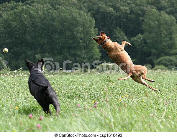 Der die Hunde rausgelassen hat - csp1618493